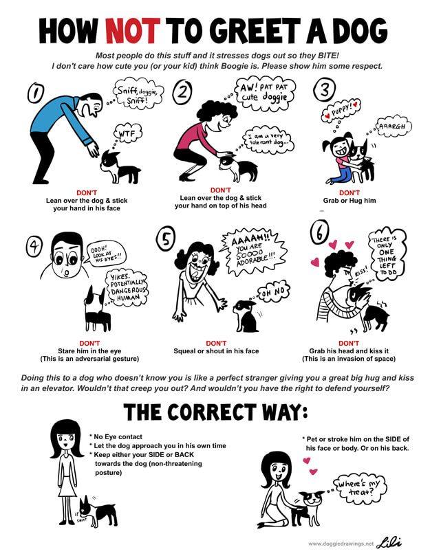 Dog body language | معهد لغة الجسد - Body Language
