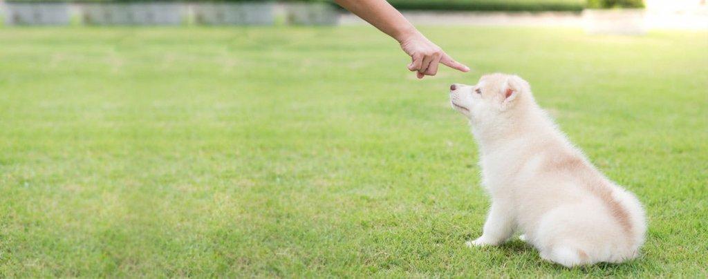 هل عليك استخدام الإشارة أم التوجيه الصوتي عند توجيه الكلب؟